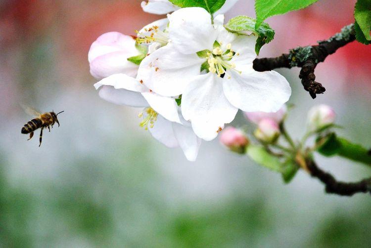 Garden Bee Flowers Polinization Polinización