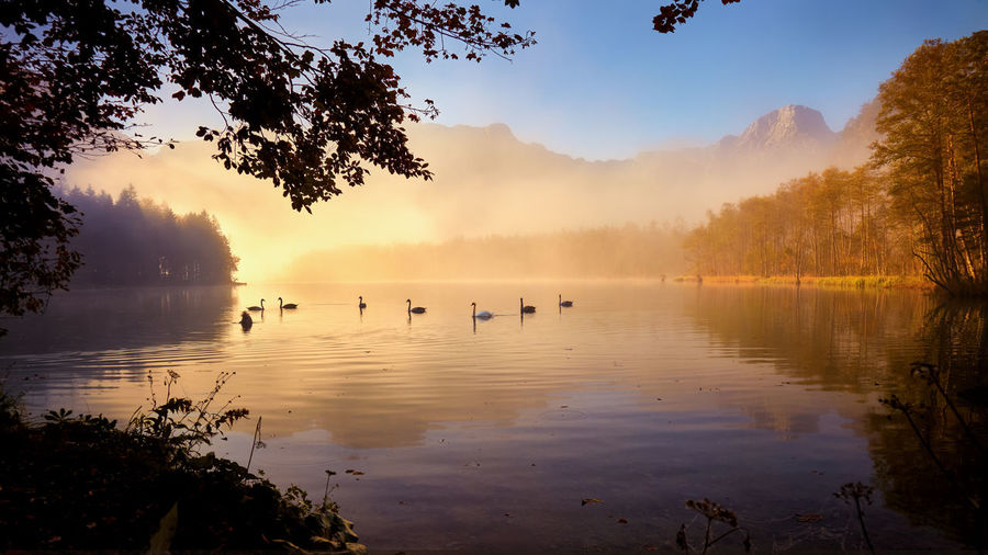 Lake View Almsee Nature Salzkammergut, Austria Grünau Herbststimmung Spiegelung Im Wasser Lichtstimmung Nebel Swans On The Lake Colors Fall Colors Misty Morning Reflection Water Tree Sky Beauty In Nature Tranquility Tranquil Scene Animals In The Wild No People Fog Bird Scenics - Nature
