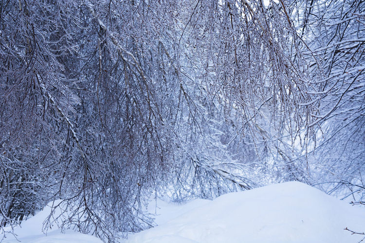 Scenic view of snow covered tree