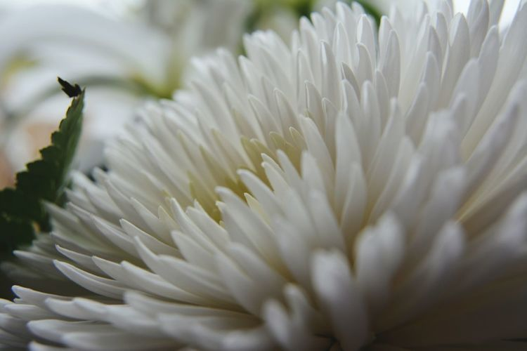 White Color Flower Close-up Plant No People Fragility Flower Head Nature Beauty In Nature Day Freshness Cornwall Photography Cornwall, UK. Beauty In Nature Plant Experimental Experimental Photography Petal EyeEmNewHere. EyeEmNewInHere EyeEmNewHere