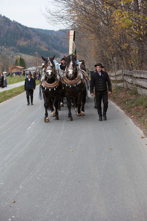 Schliersee, Bavaria - November 5, 2017: Every year on the 1st Sunday in November, the Idyllic Horse procession, named Leonhardi in Bavarian Schliersee takes place in commemoration of Patron St. Leonhard. In traditional clothing and decorated horse-drawn carriages horses and riders move to the church of St. Leonhard Bavarian Lord God Leonhard Ride Schliersee Adult Adults Only Animal Cart Day Domestic Animals Full Length Horse Horseback Riding Leisure Activity Livestock Mammal Men Nature One Animal One Person Outdoors People Real People Road Walking Young Adult