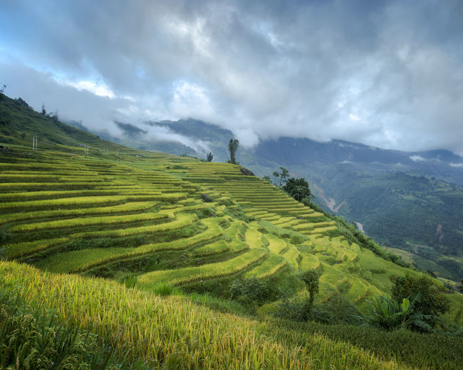 Rice fields ripe in the mountains Ngai Thau, Lao Cai, Viet Nam Clouds And Sky Field And Sky Fieldscape Heritage Life Is A Beach Stockphotography Travel Photography Vietnam