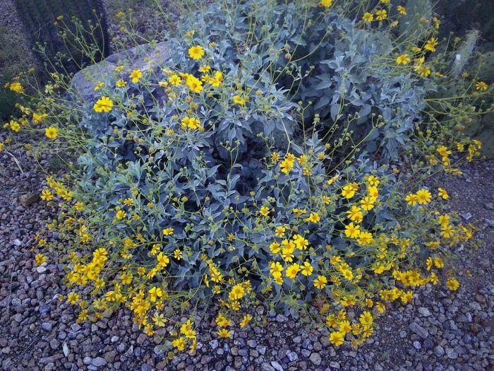 Desert, plants,