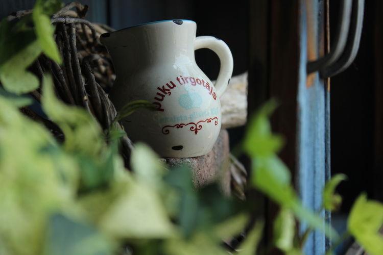 Nature Flowers,Plants & Garden 花と庭 雑貨 Plants Plants 🌱 EyeEm Gallery 花 Antique