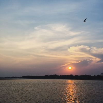 End of the day Wlodsimier Evening Lake Landscape Nature Silhouette Sky Summer Sun Water Bird Flying Thailand First Eyeem Photo