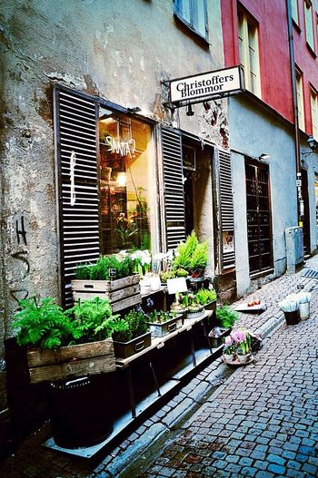 The magic and glamour sensations of florist Christoffers in Gamla stan, Stockholm