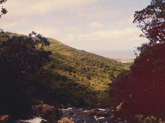 Tranquil Scene Scenics Tree Mountain Tranquility Forest Non-urban Scene Beauty In Nature Nature Sky Majestic Remote WoodLand Nature #tagsforlikes #sky #sun #summer #beach #beautiful #pretty #sunset #sunrise #blue #flowers #night #tree #twilight #clouds Solitude Water Rock - Object Idyllic Countryside Lush Foliage Cloud - Sky (null)Mauritius Island