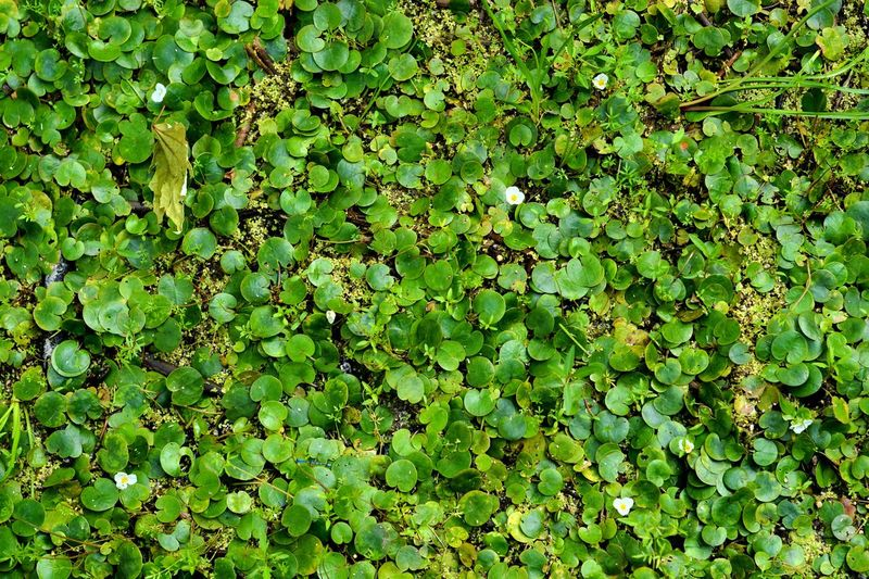 Green Color Full Frame Growth Plant Beauty In Nature Nature No People Backgrounds Tranquility Day Freshness Leaf Outdoors Plant Part High Angle View Foliage Land Sunlight Lush Foliage Tree