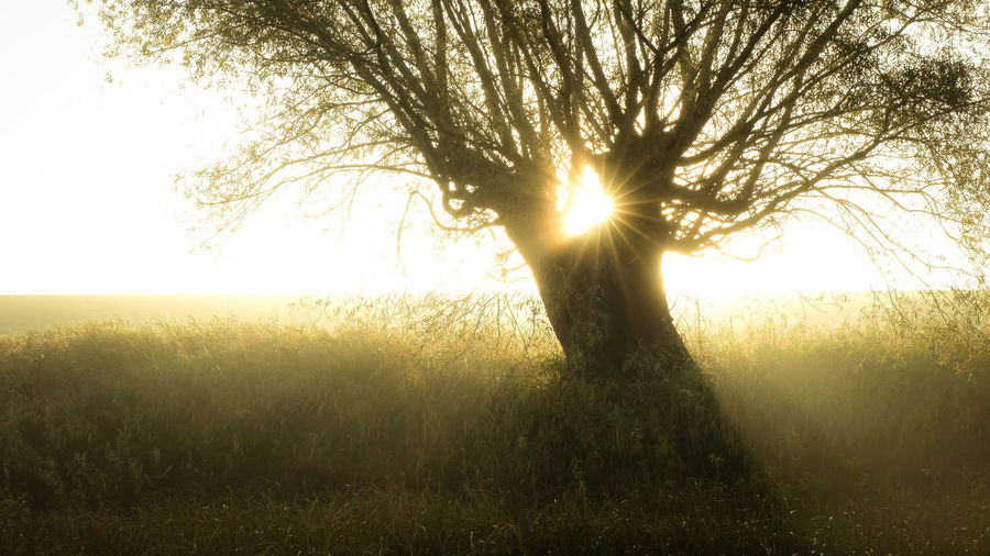 EyeEmNewHere Beauty In Nature Branch Clear Sky Day Field Grass Growth Landscape Lens Flare Lone Nature No People Outdoors Scenics Silhouette Sky Sun Sunbeam Sunlight Sunset Tranquil Scene Tranquility Tree