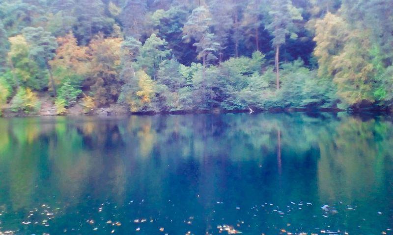 Wald Natur Nature Beauty In Nature Ansichten Ausblick Forest See Water Isenach Weiher DÜW Bad Dürkheim