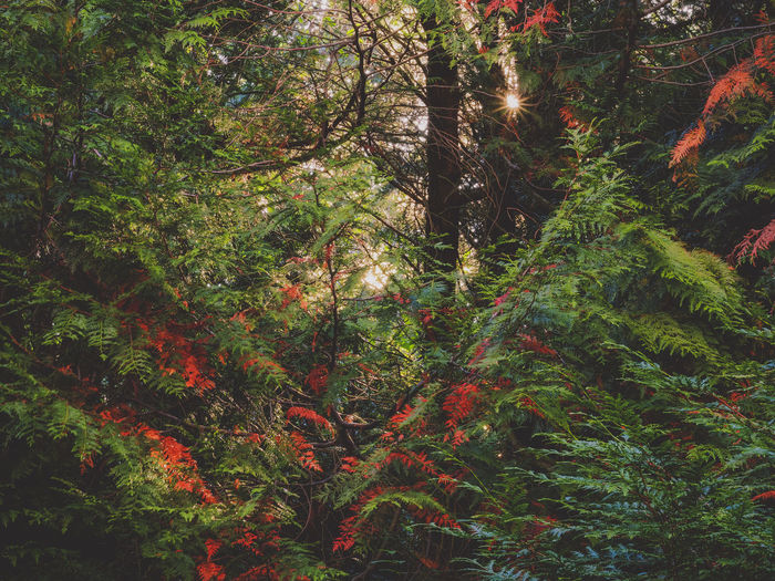 Nature Beauty In Nature Scenics Back Lit Outdoors Green No People Color Palette Wanderlust EyeEm Best Shots - Nature EyeEm Nature Lover EyeEmBestPics Light EyeEm Gallery Eyeem Collection The Week On EyeEem