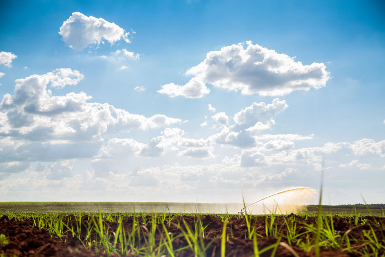 Agriculture Beauty In Nature Cloud - Sky Crop  Day Environment Farm Field Grass Growth Irrigation Land Landscape Nature No People Outdoors Plant Plantation Rural Scene Scenics - Nature Sky Sugar Cane Tranquil Scene Tranquility