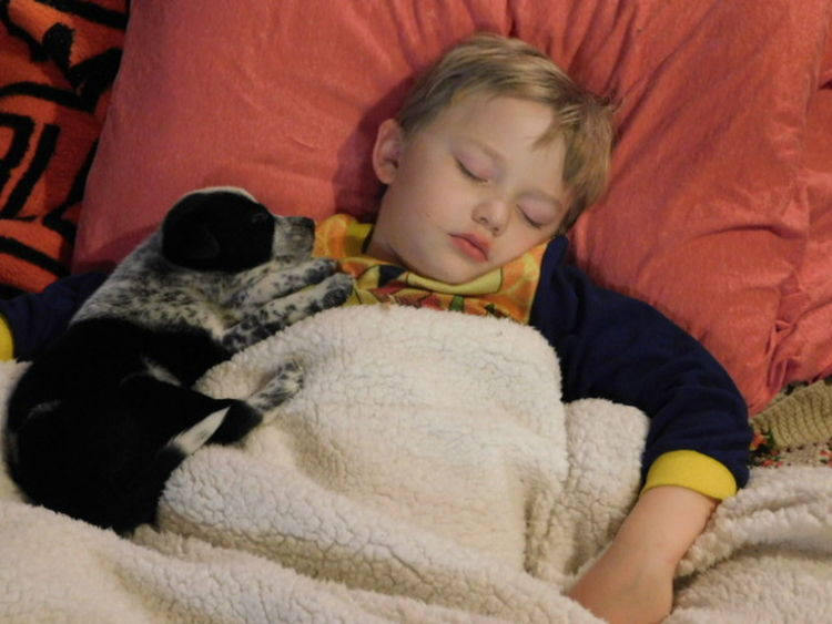 A boy and his pup Childhood Cute Domestic Animals Mammal One Animal One Person Pets Real People