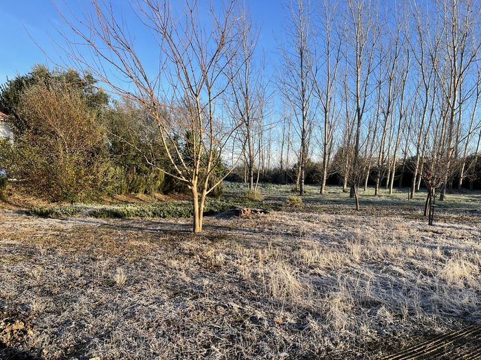 Bare trees on field against clear sky