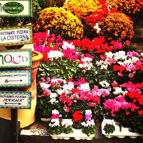 Flower Freshness Plant No People Multi Colored Flower Head Street Street Photography Italy❤️
