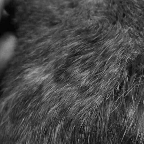 Bunnybum closeup.
