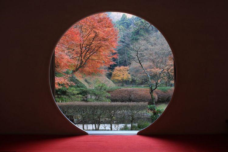 Kamakura Red Autumn Leaves Japanese-style Room