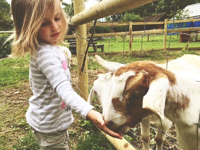 Domestic Animals Livestock Animal Themes Mammal Girl Childhood Goat Farm City Farm  Feeding Animals Fun Casual Clothing One Person Real People Grass Day Elementary Age Outdoors Cute Young Animal Lifestyles Pets Children Only