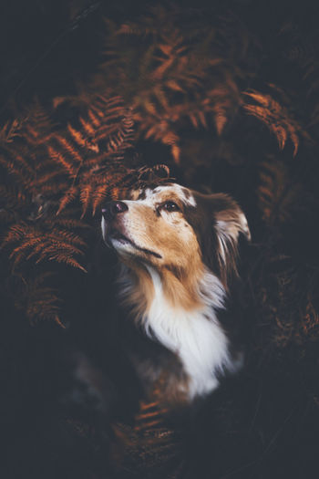 High angle view of dog looking away