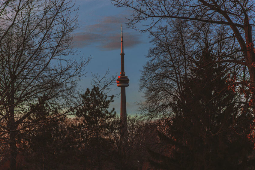 Framing Toronto Antenna - Aerial Architecture Architecture Bare Tree Branch Broadcasting Building Exterior Built Structure City Communication Day EyeEm Best Shots First Eyeem Photo Framing Framing The Subject Huế Low Angle View Nature No People Outdoors Sky Tall - High Television Tower Tower Tree EyeEmNewHere