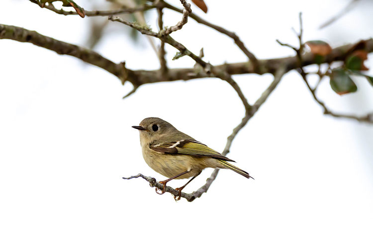 Animal Themes Bird Animal Vertebrate Animals In The Wild One Animal Animal Wildlife Perching Branch Tree Plant No People Day Nature Low Angle View Focus On Foreground Outdoors Close-up Sparrow Beauty In Nature