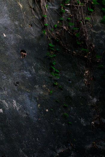 Dirty Growing Hong Kong I Love Hong Kong Mystery Narrow Natural Pattern Plant Twig Wildlife