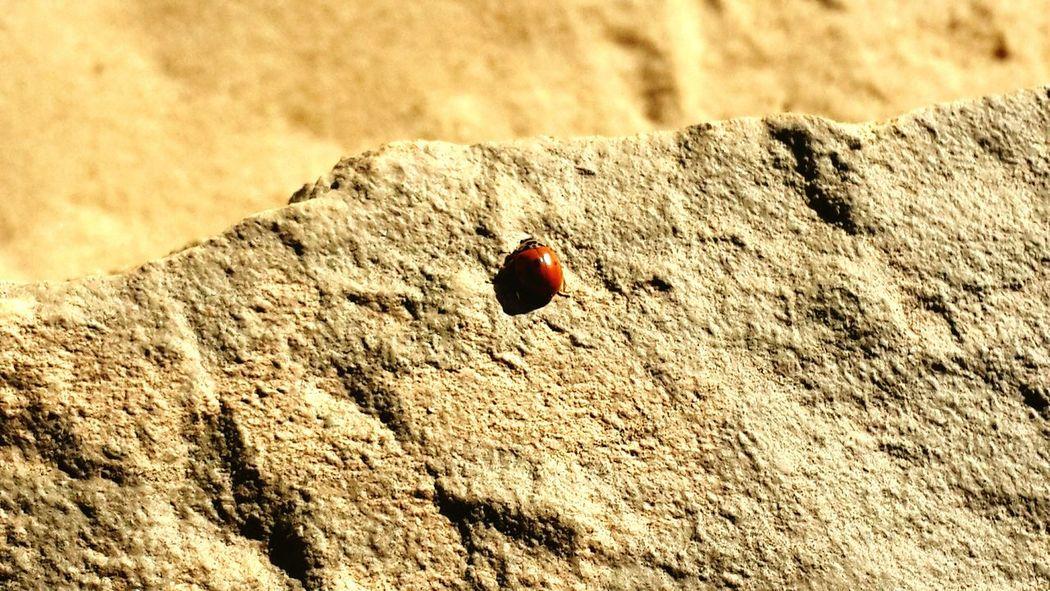 Life......Denmark Desert Beauty Essence Of Summer Nature's Diversities