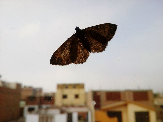 What a wonderfull wings! Butterfly - Insect Wings In The Window On The Sky
