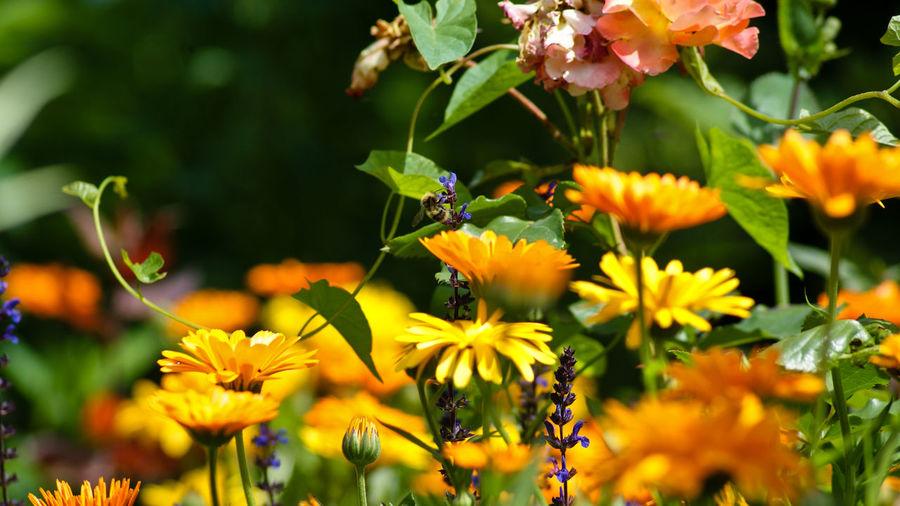 Yellow flowers blooming in garden
