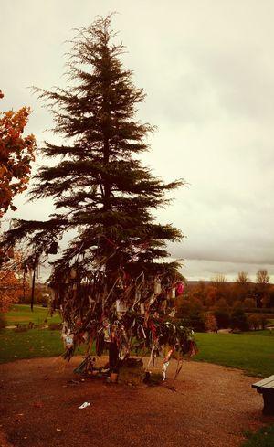 Miltonkeynes Tree