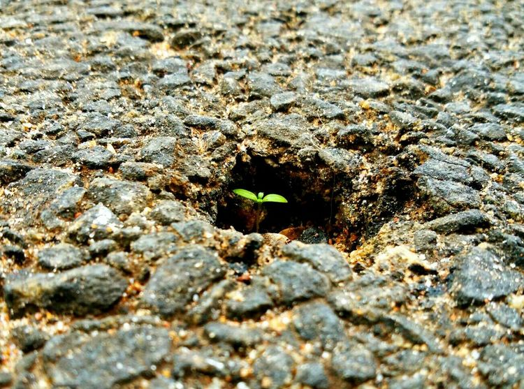 RePicture Growth Nature EyeEm Nature Lover Green Sapling Plants 🌱 Plant Indian Roads Naturewins Newlife EyeEm Gallery EyeEmBestPics Eyeemphotography On The Road Again Life Contrast Irony Rise Against Rise Again Street Photography Indiapictures Macro Beauty