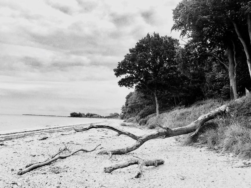 Nature Tree Tranquility Sky Scenics Sea Tranquil Scene Beauty In Nature Beach Day Outdoors Sand Horizon Over Water No People Cloud - Sky Growth Water Branch Dead Tree Kiel Travel Destinations Bnw Bnwlovers Blackandwhite