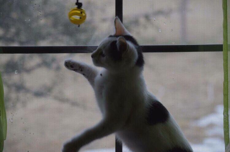 Showcase: February EyeEm Best Shots EyeEmAnimalLover Kitty Playing Animals