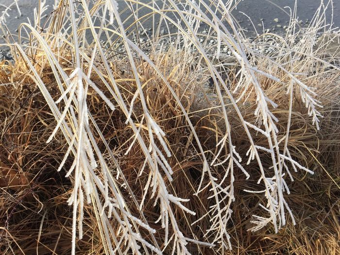 Vaduz At The River Rhine Grass Ice Field Wheat Nature Outdoors Dried Plant Beauty In Nature Rural Scene