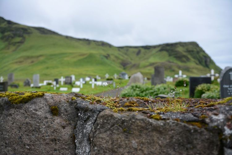 Outdoors Nature No People Close-up EyeEm Selects Antique Iceland Travel Cemetery Cemetery Photography Green Graveyard
