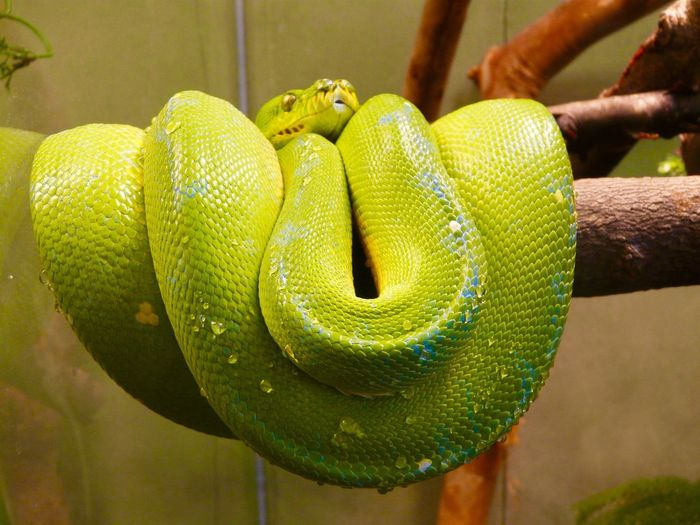 Slither up!