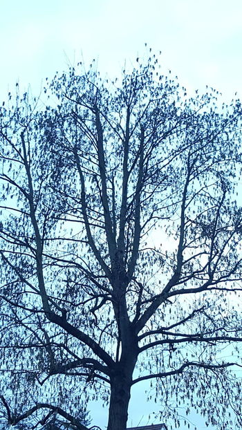 Home From Work Taking Photos Blue Sky London Coldweather S6photography Mobile Photography Branches Nature Trees Trees And Sky Leaves Looks Like A Painting