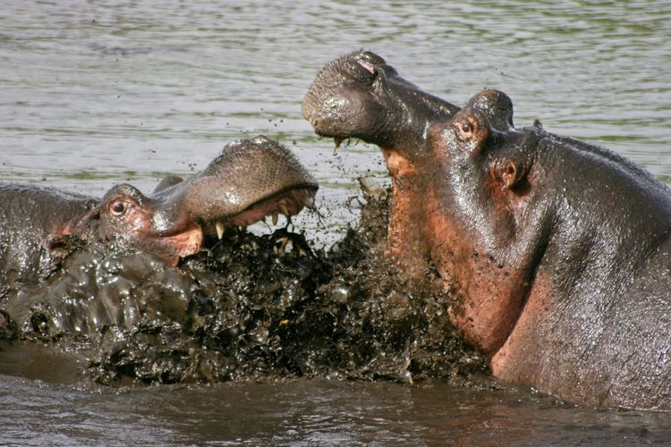 Side view of an animal in water