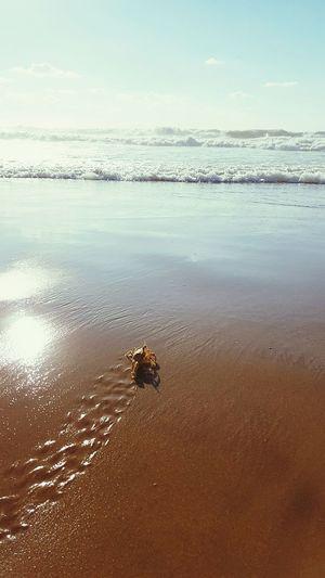 Showcase: January January2016 Mediterranean  Sand Sea Sun Waves Crab Kámoš Nature The Week Of Eyeem EyeEm Best Shots The Great Outdoors - 2016 EyeEm Awards The Great Outdoors With Adobe Miles Away Sommergefühle Lost In The Landscape