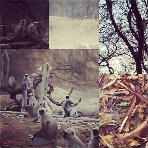 Kaali Ghaati! :D Outings  Jungle Monkeys Fall nature instajaipur instajps goodtimes moments