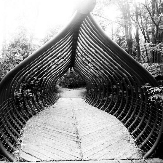 Bridge in the woods Bridge Urbanexploration Hidden Places Blackandwhite A Walk In The Woods Urban Forest The Architect - 2015 EyeEm Awards The Traveler - 2015 EyeEm Awards Fine Art Photograhy