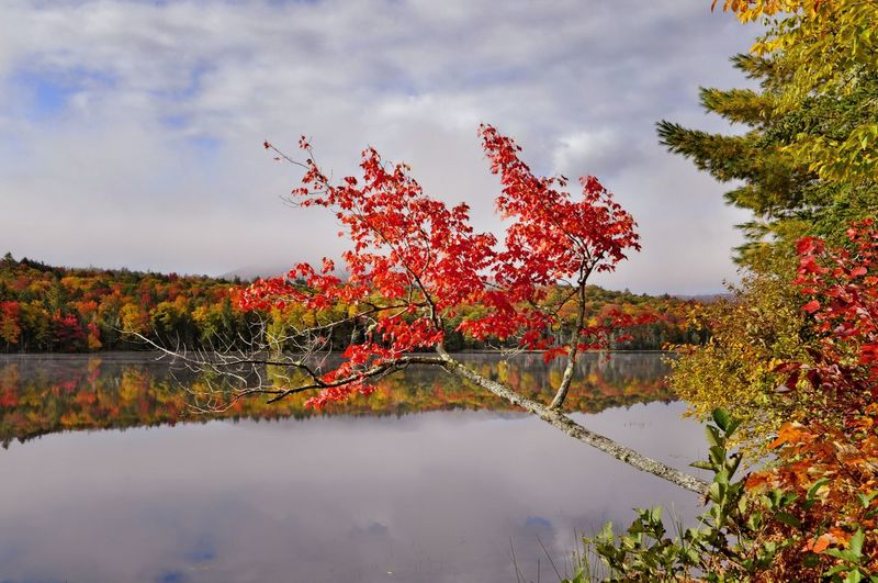 Scenic view of calm lake against trees during autumn