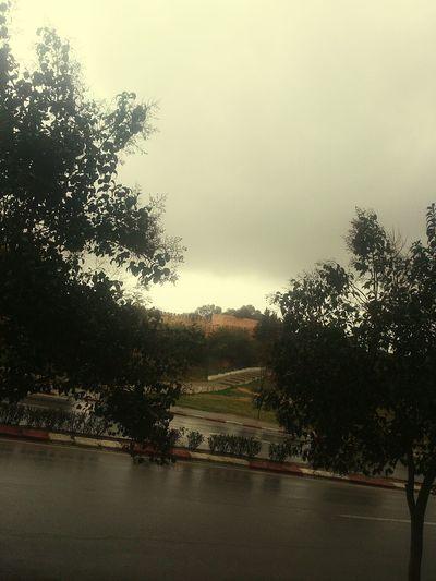 Trees Between Trees Road Rainy Day Cloudy Sky Xperia S