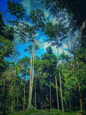 Tree And Sky Tree In Nature Nature Photography Nature Collection Tree Photography Tree_collection  Beauty Of Nature Tree Nature Sky Green Color