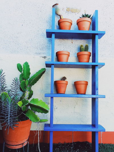 Potted plants on shelf against wall