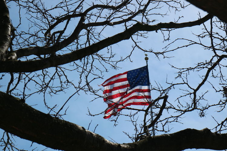 Tree Low Angle View Sky Patriotism Plant Branch Flag Nature Bare Tree No People Red Day Outdoors Striped Shape Architecture Emotion Independence
