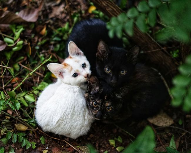 No People No Person Day Pets Portrait Looking At Camera Cute Close-up Infant Kitten Young Animal Domestic Cat Duckling Cat Tabby Animal Family