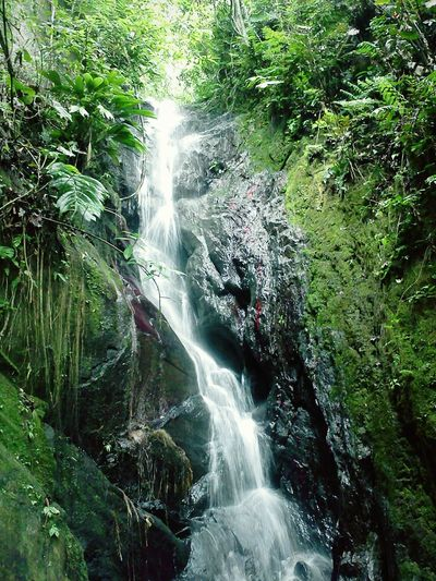 Waterfall Water Forest Motion Beauty In Nature Nature Scenics Green Color Growth Outdoors Rock Formation Flowing Water Power In Nature Flowing Beauty In Nature Tranquil Scene Tranquility