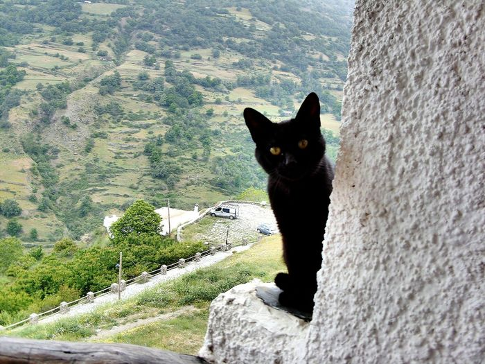 Vew Out Of The Window AlpujarraSpain ✈️🇪🇸 High Angle View Flying High Mountain Range Nature Scenics Beauty In Nature Day Green Color Tranquility Sky Travel Destinations Travel Photography Landscape Mammal One Animal Looking At Camera Domestic Cat Pets Close-up Portrait Village View Mountain