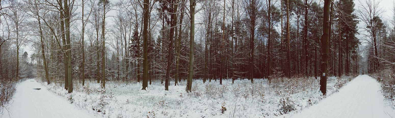 Smartphonephotography Panoramic Nature_collection Snow Tree Wintertime Snow Zielony Las Forest Nature